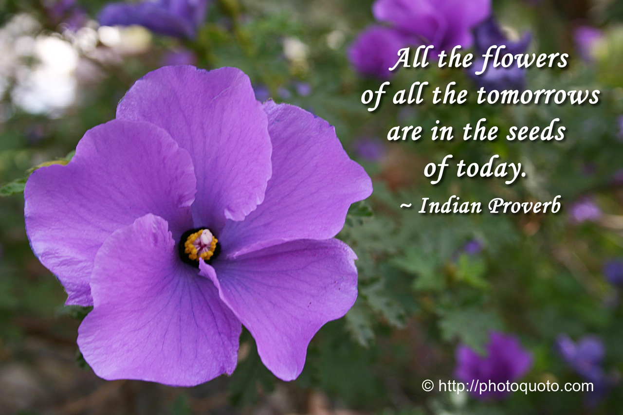 Sayings Quotes Indian Proverb Photo Quoto