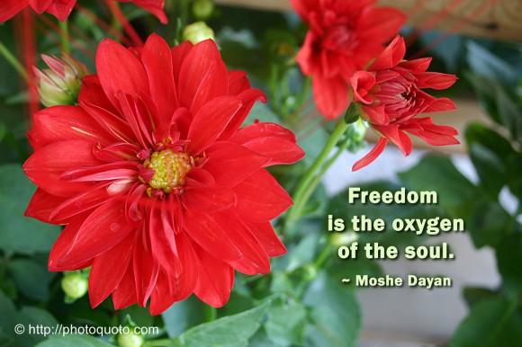 Freedom is the oxygen of the soul. ~ Moshe Dayan