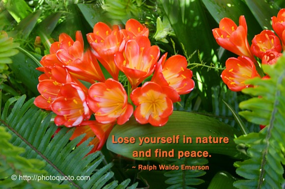 Lose yourself in nature and find peace. ~ Ralph Waldo Emerson