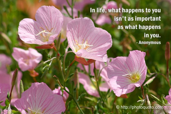 In life, what happens to you isn't as important as what happens in you. ~ Anonymous
