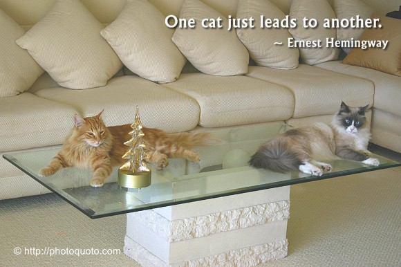 One cat just leads to another. ~ Ernest Hemingway