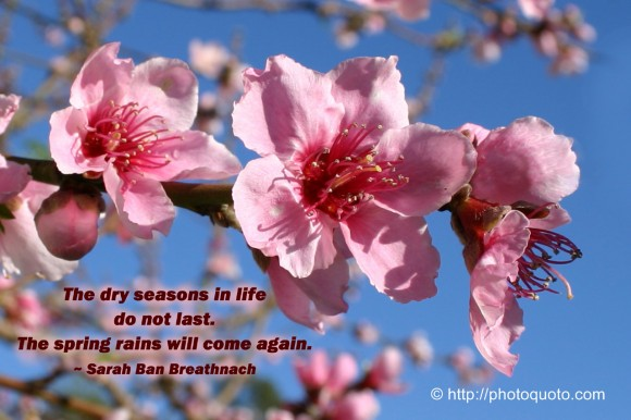 The dry seasons in life do not last. The spring rains will come again. ~ Sara Ban Breathnach