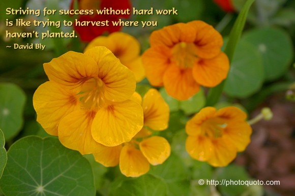Striving for success without hard work is like trying to harvest where you haven't planted. ~ David Bly