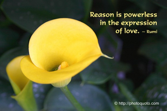 Reason is powerless in the expression of Love. ~ Rumi