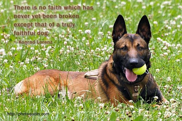 There is no faith which has never yet been broken except that of a truly faithful dog. ~ Konrad Lorenz