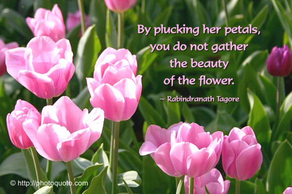 By plucking her petals, you do not gather the beauty of the flower. ~ Rabindranath Tagore