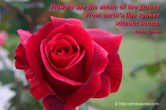 Flowers are the music of the ground From earth's lips spoken without sound. ~ Edwin Curran