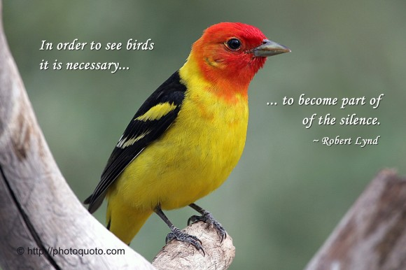 In order to see birds it is necessary to become part of the silence. ~ Robert Lynd