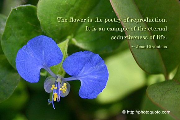 The flower is the poetry of reproduction. It is an example of the eternal seductiveness of life. ~ Jean Giraudoux