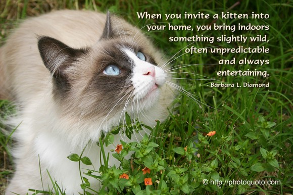 When you invite a kitten into your home, you bring indoors something slightly wild, often unpredictable and always entertaining. ~ Barbara L. Diamond
