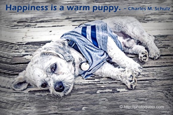 Happiness is a warm puppy. ~ Charles M. Schulz