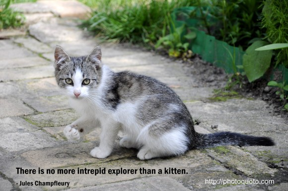 There is no more intrepid explorer than a kitten. ~  Jules Champfleury