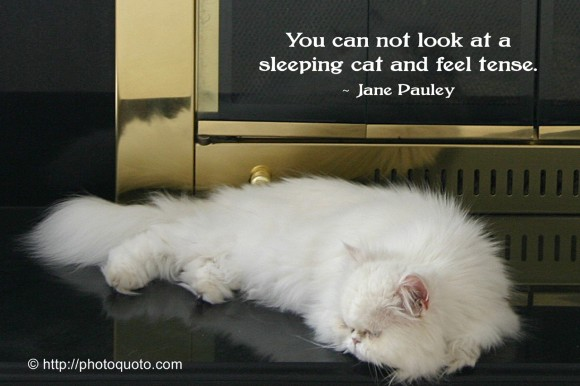 You can not look at a sleeping cat and feel tense. - Jane Pauley